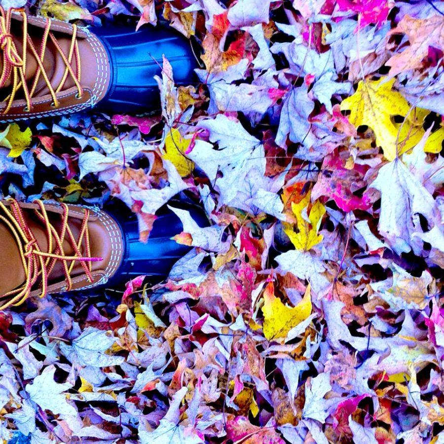Many+use+photography+to+appreciate+the+multi-colored+leaves+and+changing+scenery+during+the+autumn+season.%0ACourtesy+of+Chelsea+Cutler