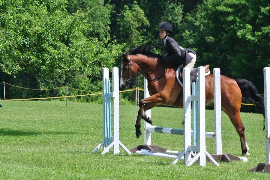 Jumper+at+a+GRTA+sponsored+horse+show+Alana+Galloway+%2716