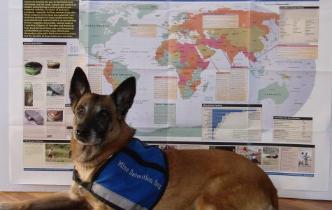 Senna, who was previously employed in the Mine Detection dog program, visited Convent of the Sacred Heart April 10 to help students learn more about the ongoing global battle against landmines. Courtesy of Kirsten Parkinson '15
