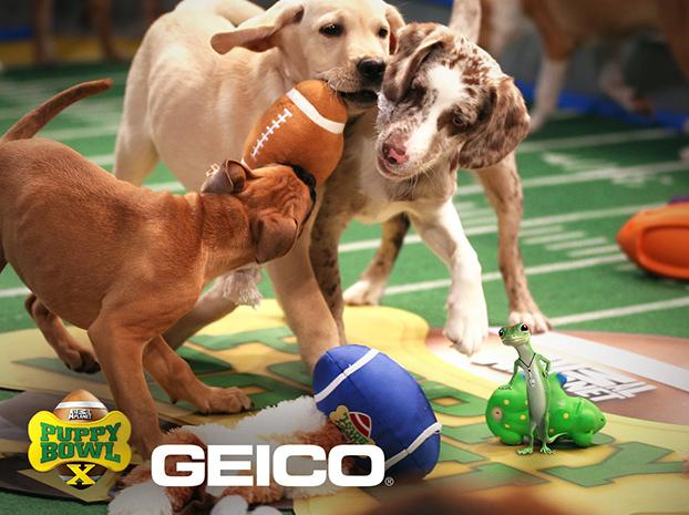 Three+puppies+race+to+the+ball+during+Puppy+Bowl+X.%0ACourtesy+of+animalplanet.com