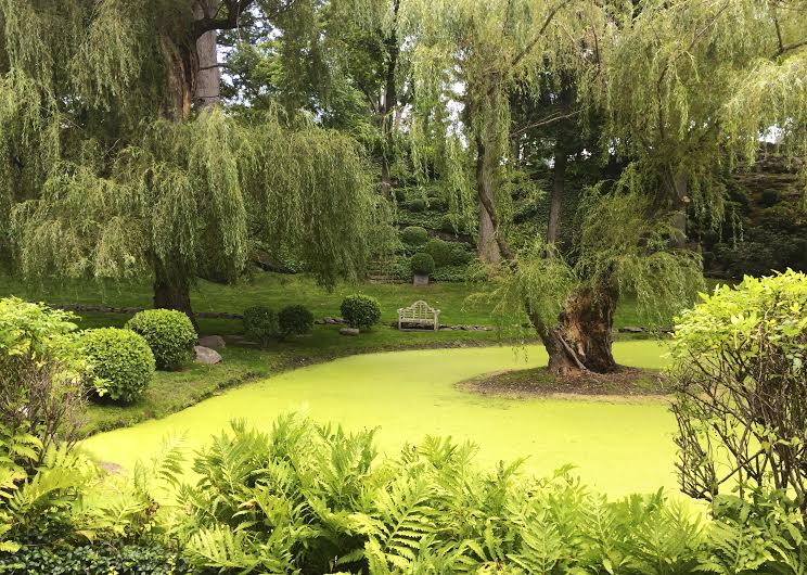 Photo+of+the+Week-+%22Weeping+Willow%22-+Courtesy+of+Gissele+Alzate+%2715