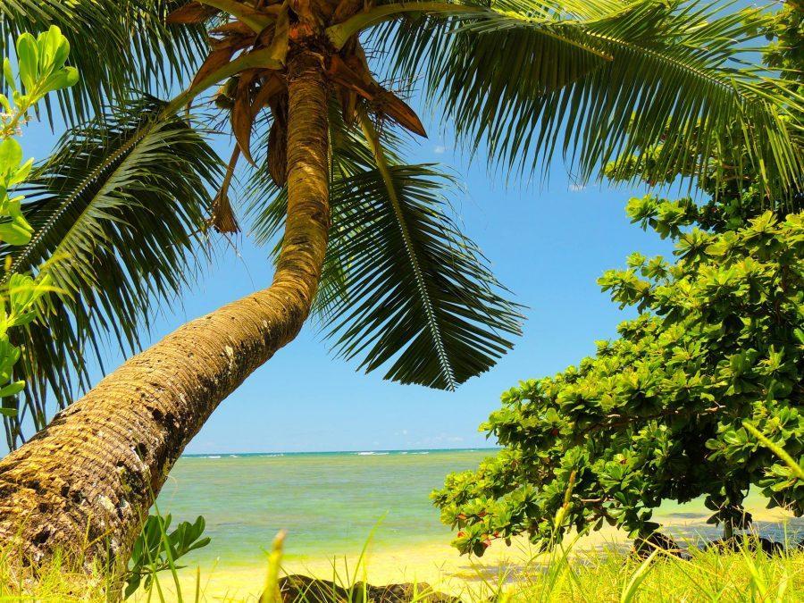 Kanaha Beach, Maui - Courtesy of Alana Maguire 16