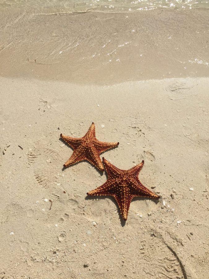 %22Starfish%22+Courtesy+of+Nathalie+Perreault++%2718+