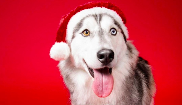 Dogs coming home for Christmas