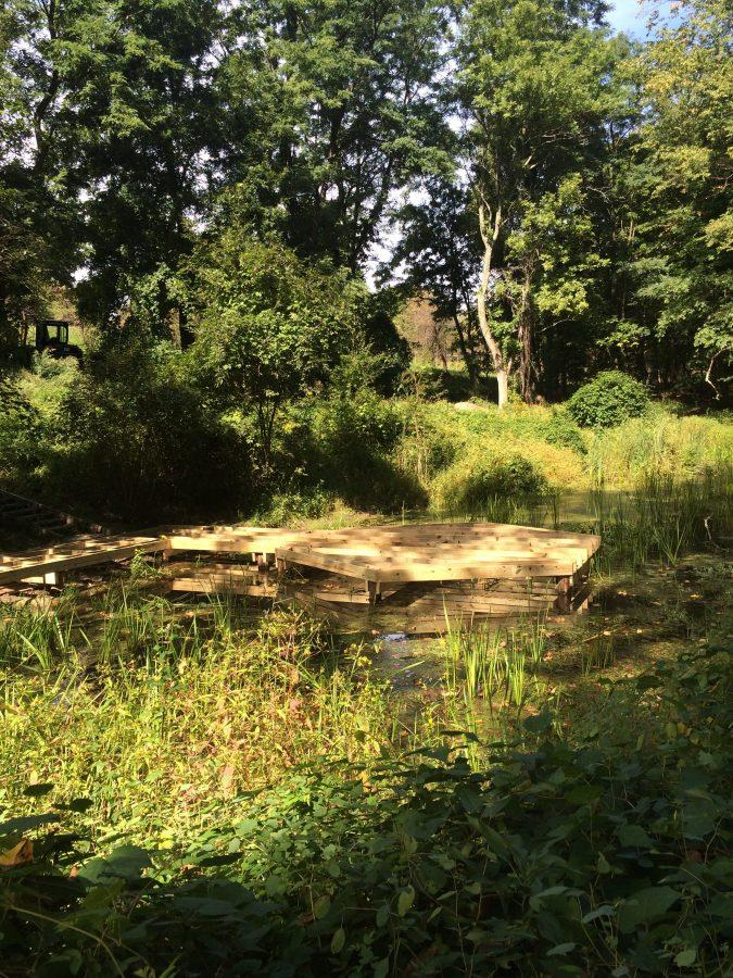 A pond bustling with diverse plant and aquatic life at Audubon Greenwich. Christina Weiler '17.