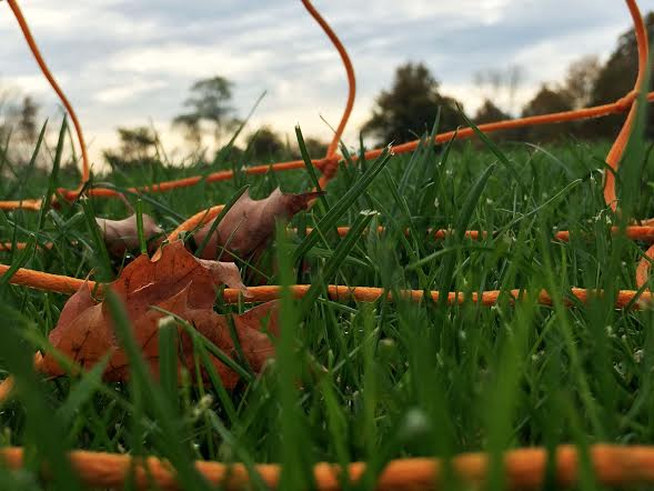 Photo of the week - Grassy Lands -  Courtesy of Shannon Pyne17