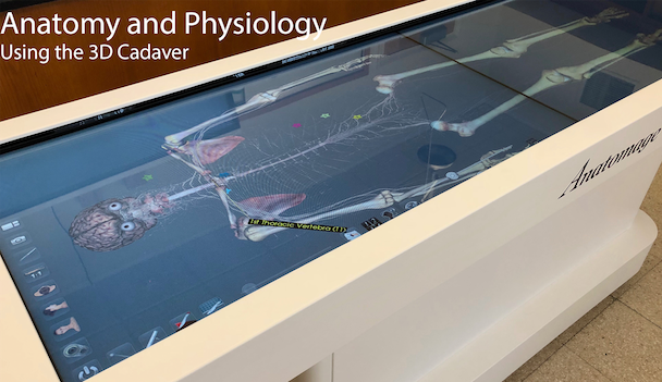 Anatomy comes to life in the classroom