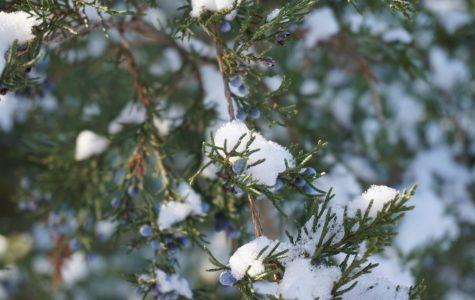 "Art of the Week – ""Snowfall"" – Sarah Mickley '21"