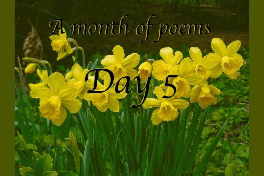 A month of poems: Day five