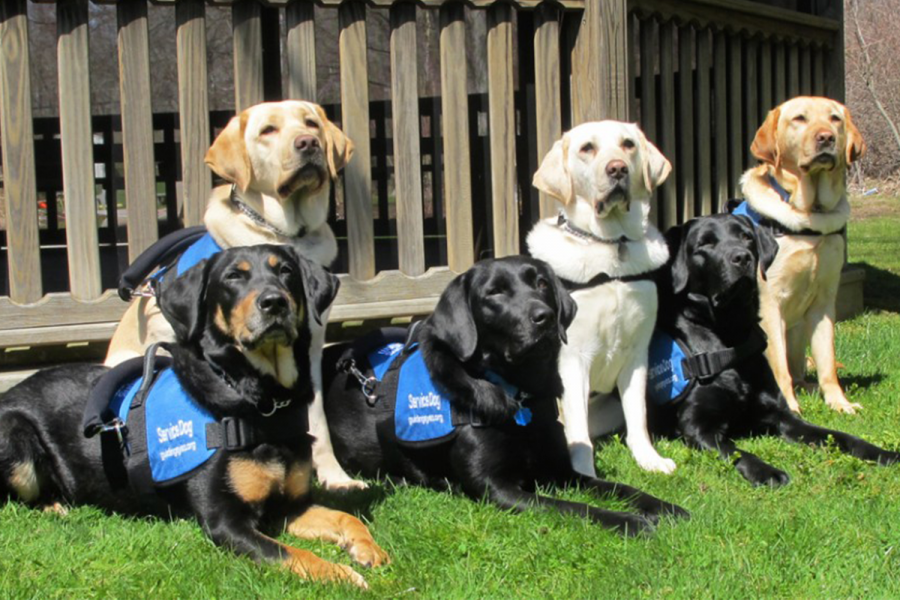 Guiding Eyes for the Blind is a nonprofit organization that trains and provides service dogs for the visually impaired.